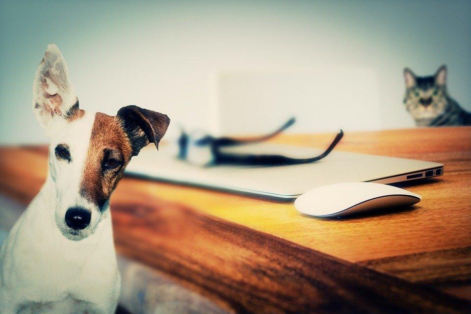 dog-624952_960_720